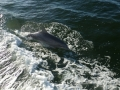 Everglades-SharkValley00001.jpg