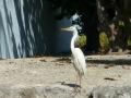 Everglades-SharkValley00002.jpg