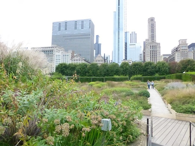 Chicago00113