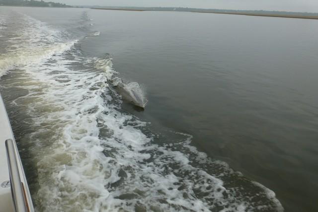 Dolphin_Madness009.jpg