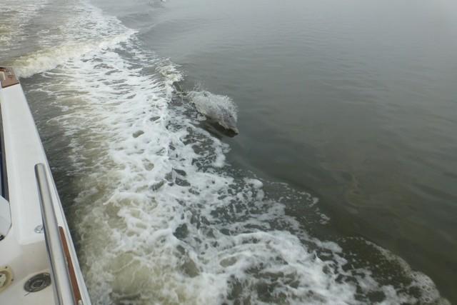 Dolphin_Madness011.jpg
