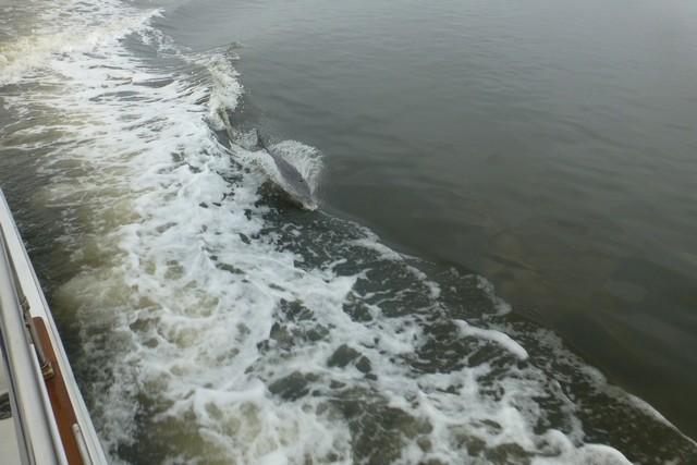 Dolphin_Madness013.jpg