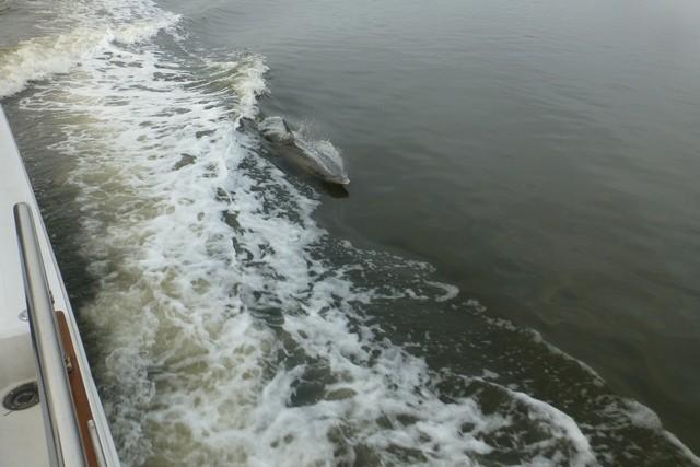 Dolphin_Madness015.jpg