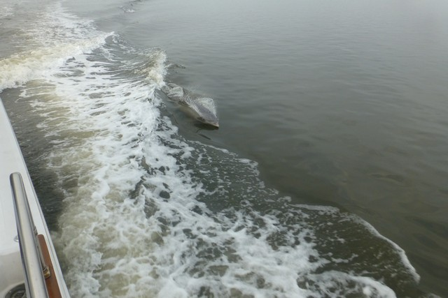 Dolphin_Madness019.jpg
