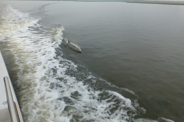 Dolphin_Madness023.jpg