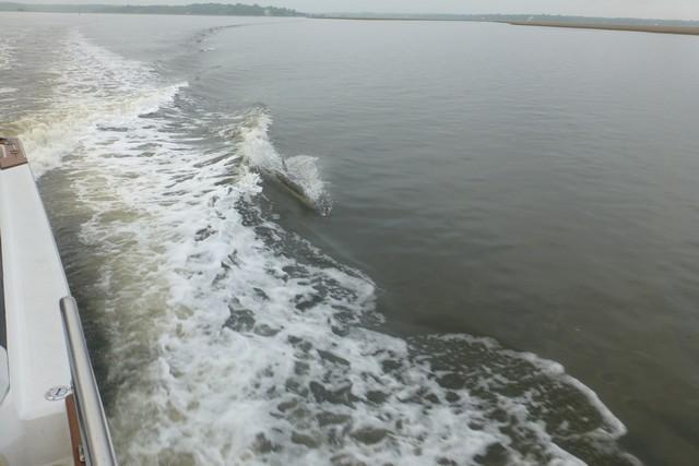 Dolphin_Madness025.jpg