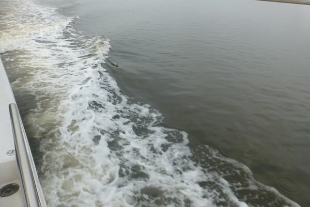 Dolphin_Madness029.jpg