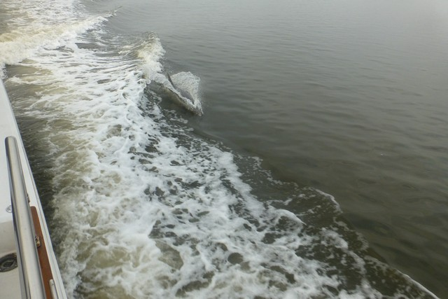 Dolphin_Madness030.jpg