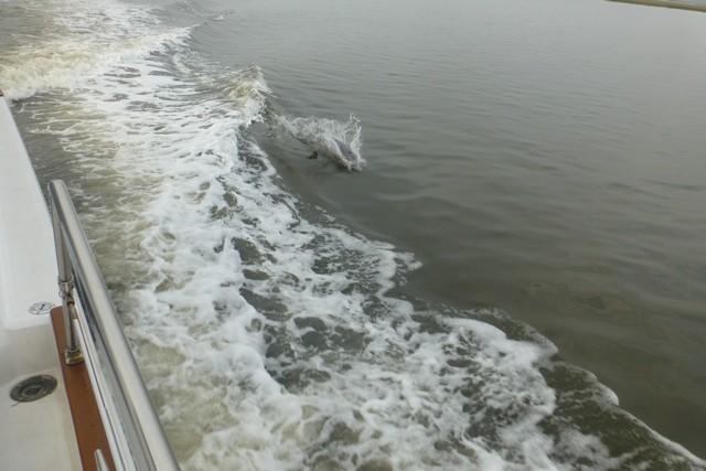 Dolphin_Madness033.jpg