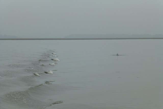 Dolphin_Madness047.jpg