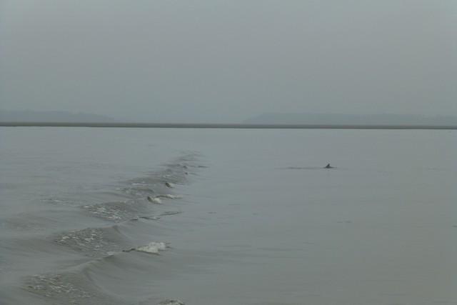 Dolphin_Madness048.jpg