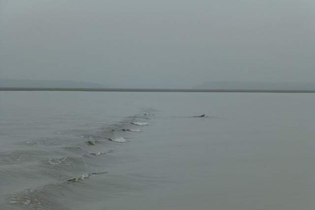 Dolphin_Madness049.jpg
