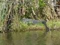 Everglades_100008.jpg