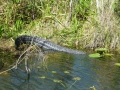 Everglades_100010.jpg