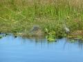 Everglades_100012.jpg