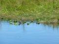 Everglades_100013.jpg