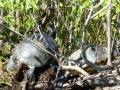 Everglades_100017.jpg
