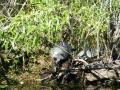 Everglades_100018.jpg