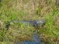 Everglades_100019.jpg