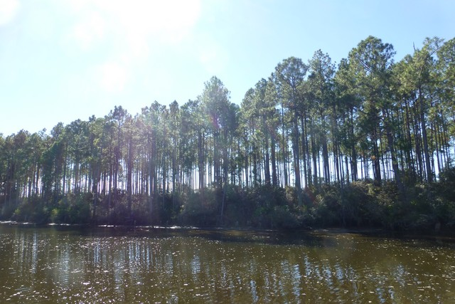 Apalachicola00056