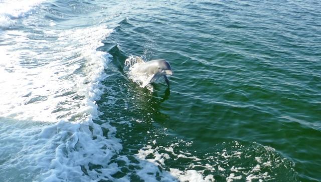 dolphin_buddy_small