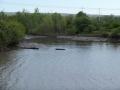 Erie-Canal3al00052