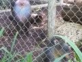 Monkey_Jungle00001.jpg