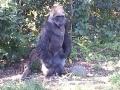 Monkey_Jungle00003.jpg