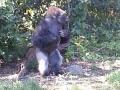 Monkey_Jungle00004.jpg