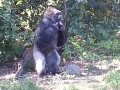 Monkey_Jungle00005.jpg