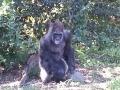 Monkey_Jungle00007.jpg