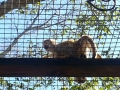 Monkey_Jungle00009.jpg