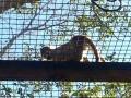 Monkey_Jungle00010.jpg