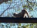Monkey_Jungle00011.jpg