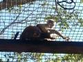 Monkey_Jungle00012.jpg