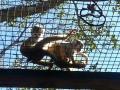 Monkey_Jungle00013.jpg