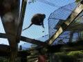 Monkey_Jungle00018.jpg