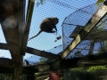 Monkey_Jungle00020.jpg