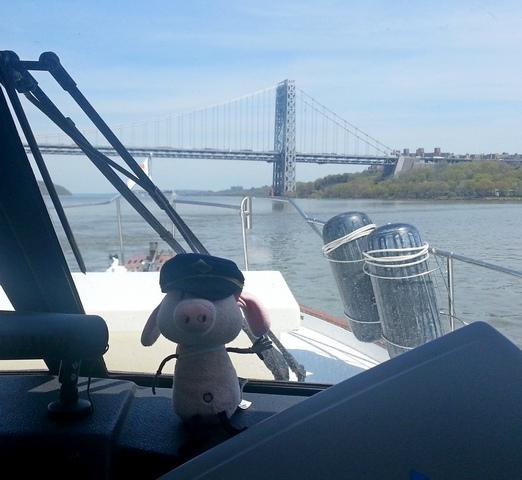 Pig_George_Washington_bridge_050714