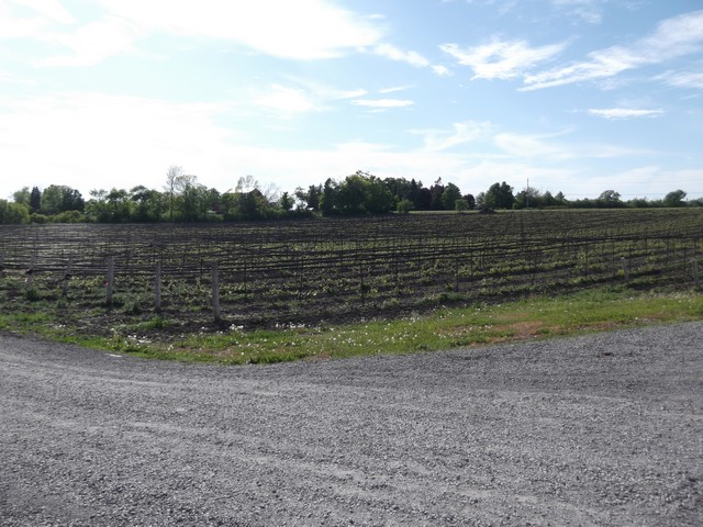 Winery_Tour00028