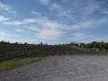 Winery_Tour00029