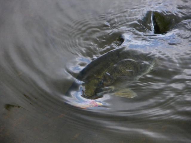 landingfish2