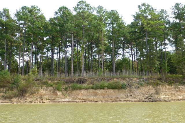 Tensaw_River0000030