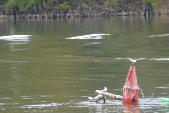 Tensaw_River0000050