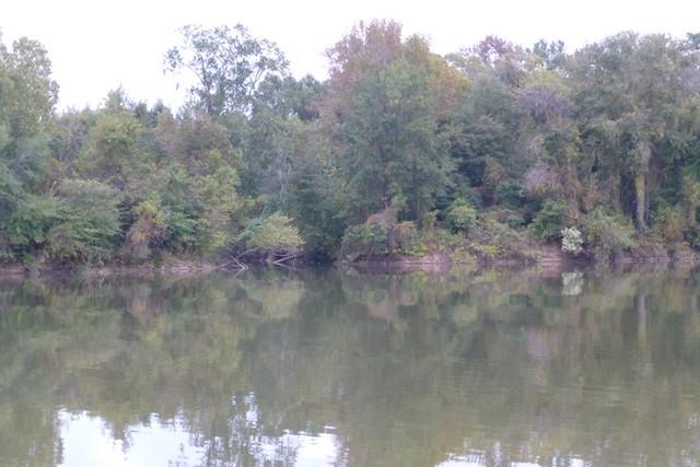 Tensaw_River0000059