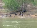 Tensaw_River0000007
