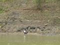 Tensaw_River0000014