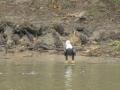 Tensaw_River0000015