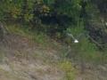 Tensaw_River0000016