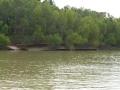 Tensaw_River0000029